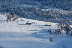 5Previja-sneg-Zlatibor.jpg